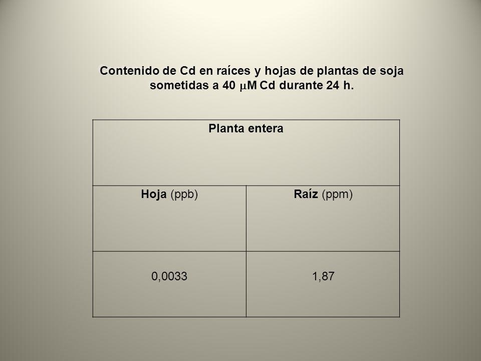 Planta entera Hoja (ppb)Raíz (ppm) 0,00331,87 Contenido de Cd en raíces y hojas de plantas de soja sometidas a 40 M Cd durante 24 h.