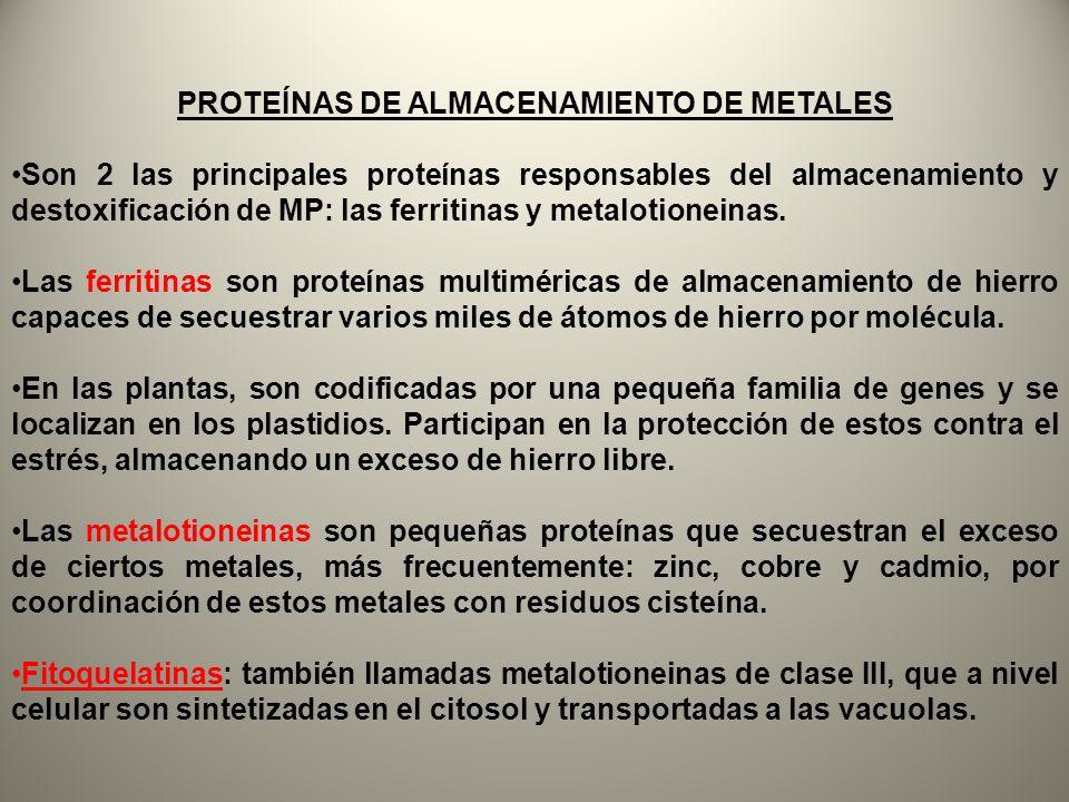 PROTEÍNAS DE ALMACENAMIENTO DE METALES Son 2 las principales proteínas responsables del almacenamiento y destoxificación de MP: las ferritinas y metal