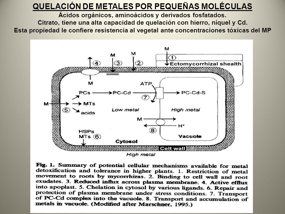 QUELACIÓN DE METALES POR PEQUEÑAS MOLÉCULAS Ácidos orgánicos, aminoácidos y derivados fosfatados. Citrato, tiene una alta capacidad de quelación con h