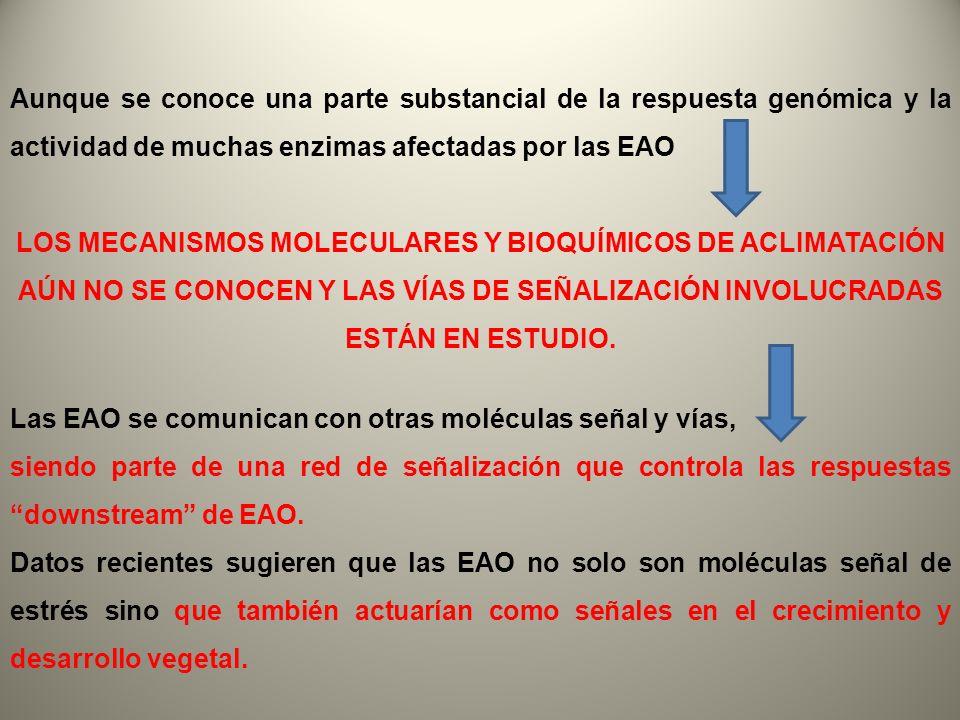 Aunque se conoce una parte substancial de la respuesta genómica y la actividad de muchas enzimas afectadas por las EAO LOS MECANISMOS MOLECULARES Y BI
