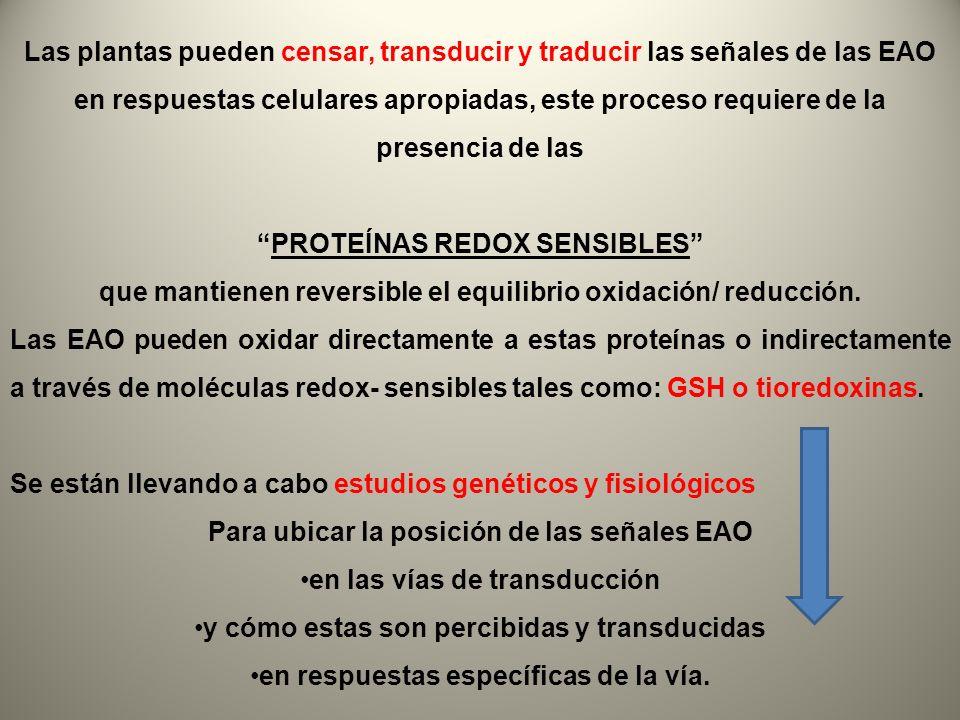 Las plantas pueden censar, transducir y traducir las señales de las EAO en respuestas celulares apropiadas, este proceso requiere de la presencia de l