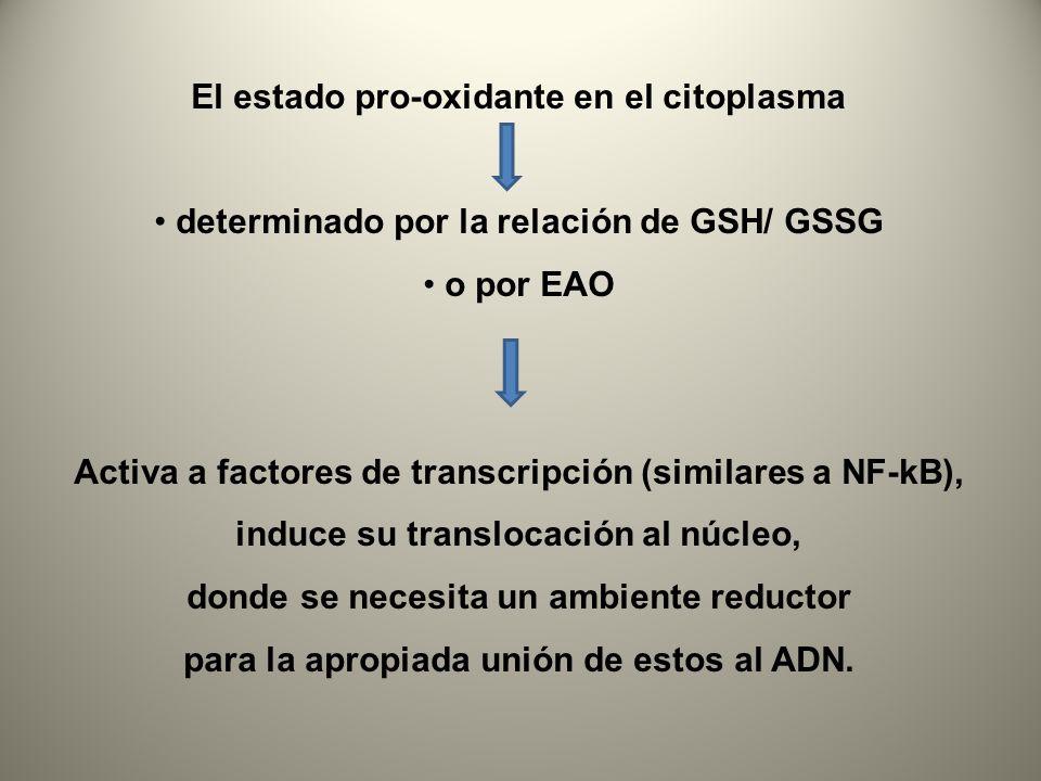 El estado pro-oxidante en el citoplasma determinado por la relación de GSH/ GSSG o por EAO Activa a factores de transcripción (similares a NF-kB), ind