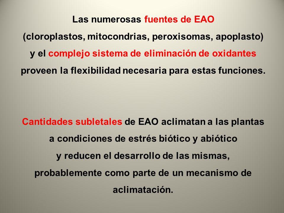 Las numerosas fuentes de EAO (cloroplastos, mitocondrias, peroxisomas, apoplasto) y el complejo sistema de eliminación de oxidantes proveen la flexibi