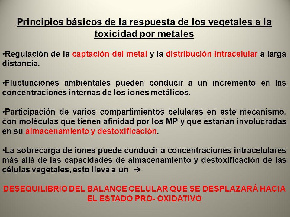 Principios básicos de la respuesta de los vegetales a la toxicidad por metales Regulación de la captación del metal y la distribución intracelular a l