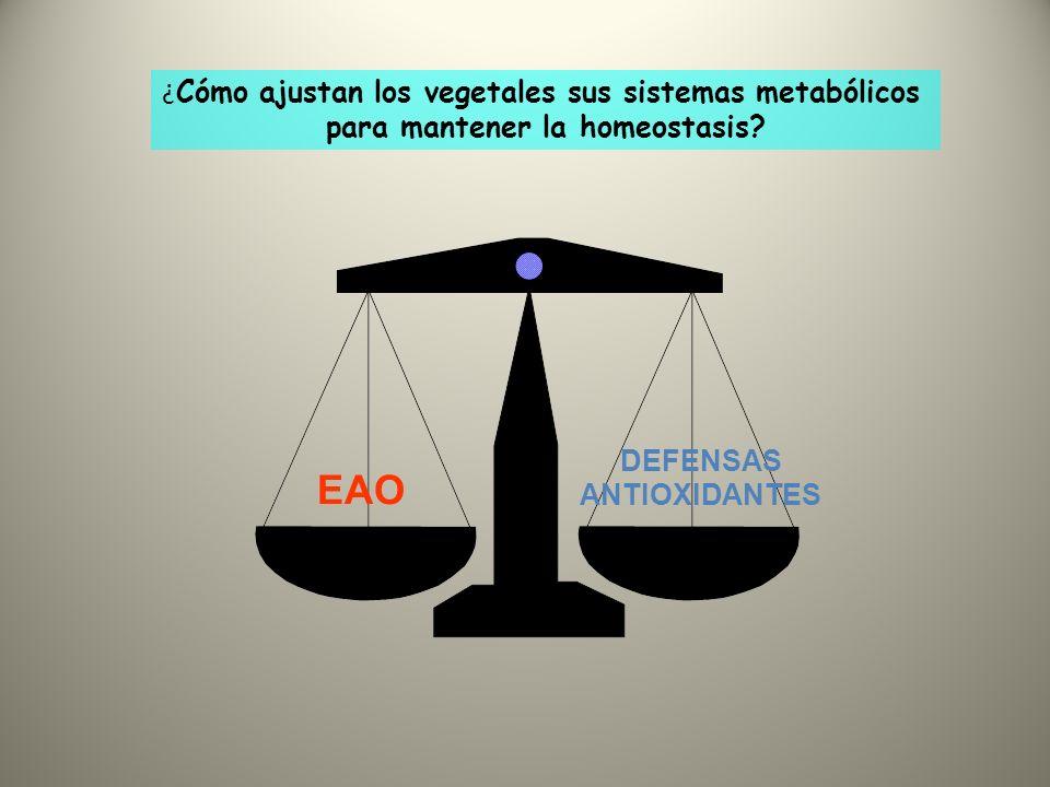 EAO DEFENSAS ANTIOXIDANTES ¿ Cómo ajustan los vegetales sus sistemas metabólicos para mantener la homeostasis?