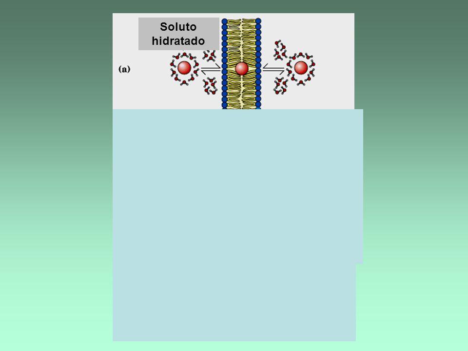 Soluto hidratado Dif.simple Sin transportador Dif.facilitada c/ transportador G * Dif.simple G * c/transp. Proteína transportadora