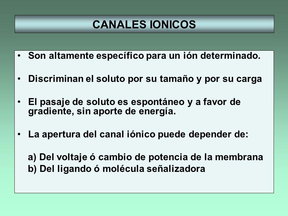 CANALES IONICOS Son altamente específico para un ión determinado. Discriminan el soluto por su tamaño y por su carga El pasaje de soluto es espontáneo