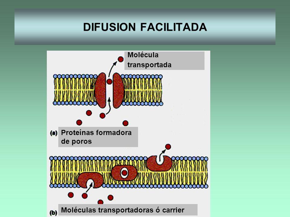 DIFUSION FACILITADA Proteínas formadora de poros Moléculas transportadoras ó carrier Molécula transportada