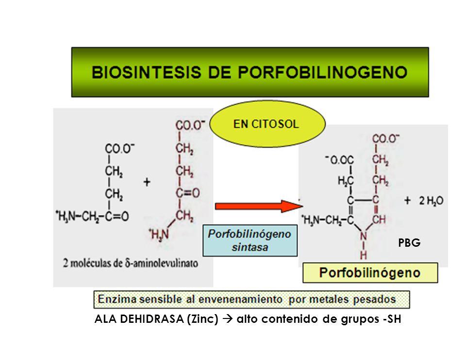 ALA DEHIDRASA (Zinc) alto contenido de grupos -SH PBG