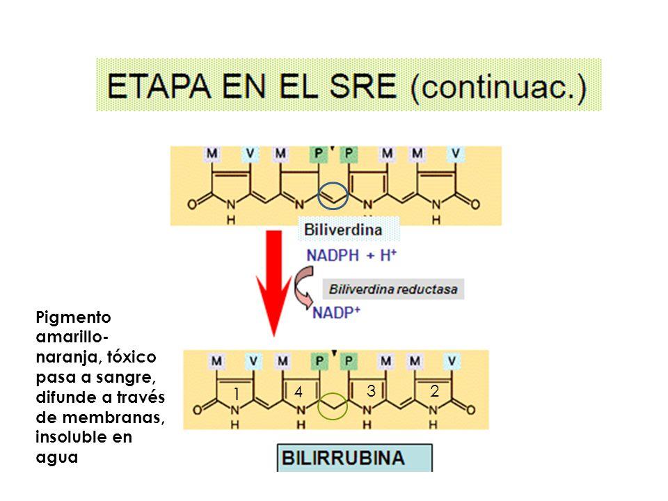 Pigmento amarillo- naranja, tóxico pasa a sangre, difunde a través de membranas, insoluble en agua 23 4