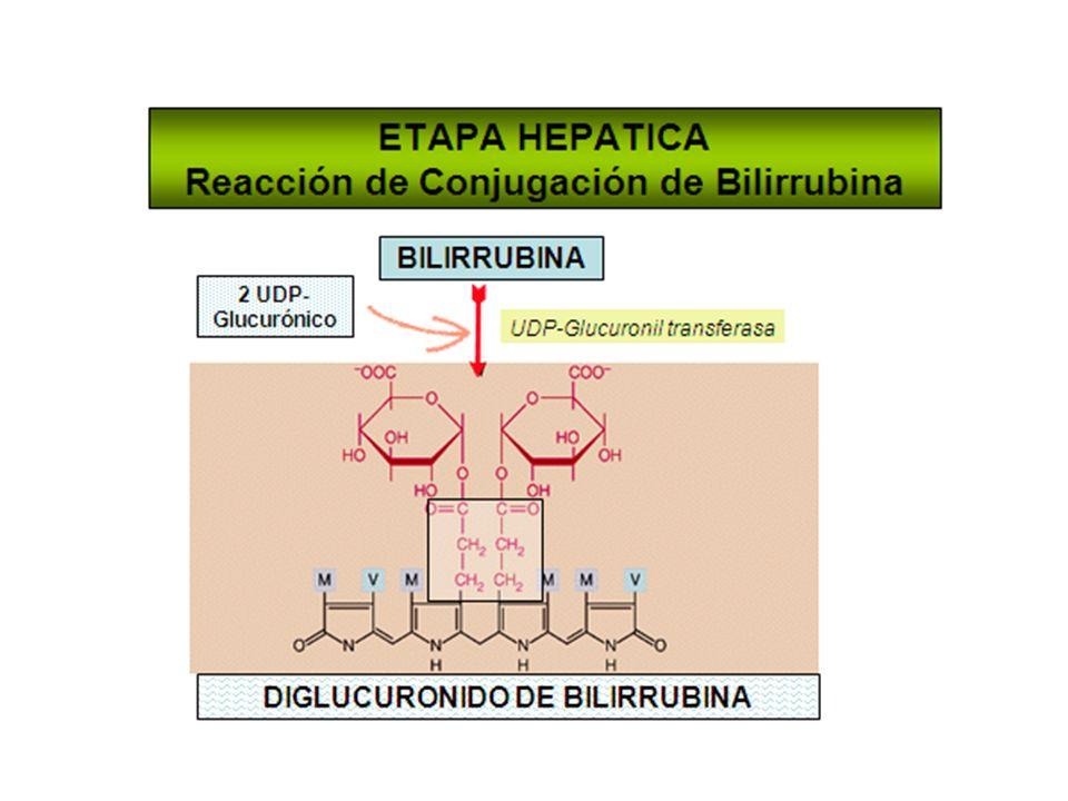 En la etapa hepática bilirrubina se separa de albúmina y entra por difusión facilitada: bilitranslocasa.