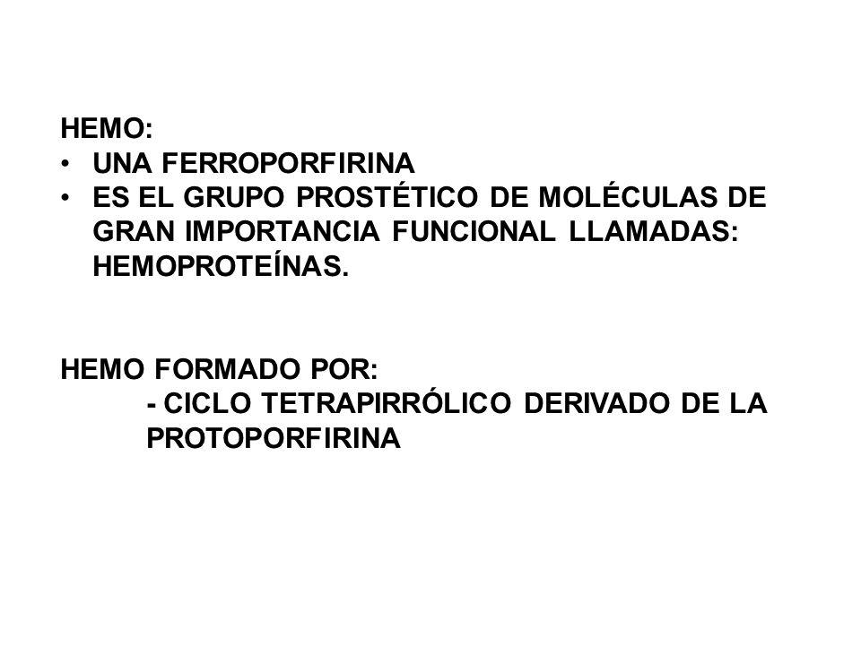 HEMO: UNA FERROPORFIRINA ES EL GRUPO PROSTÉTICO DE MOLÉCULAS DE GRAN IMPORTANCIA FUNCIONAL LLAMADAS: HEMOPROTEÍNAS. HEMO FORMADO POR: - CICLO TETRAPIR