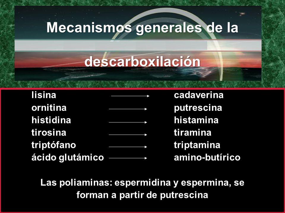 Mecanismos generales de la descarboxilación Mecanismos generales de la descarboxilación lisina cadaverina ornitina putrescina histidina histamina tiro