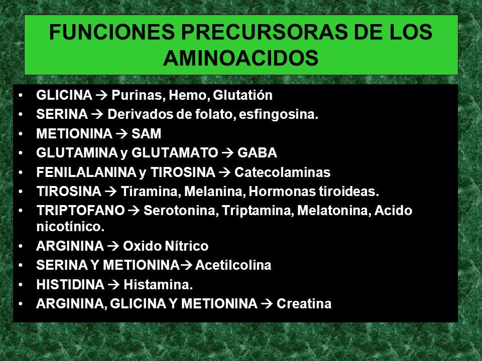 FUNCIONES PRECURSORAS DE LOS AMINOACIDOS GLICINA Purinas, Hemo, Glutatión SERINA Derivados de folato, esfingosina. METIONINA SAM GLUTAMINA y GLUTAMATO