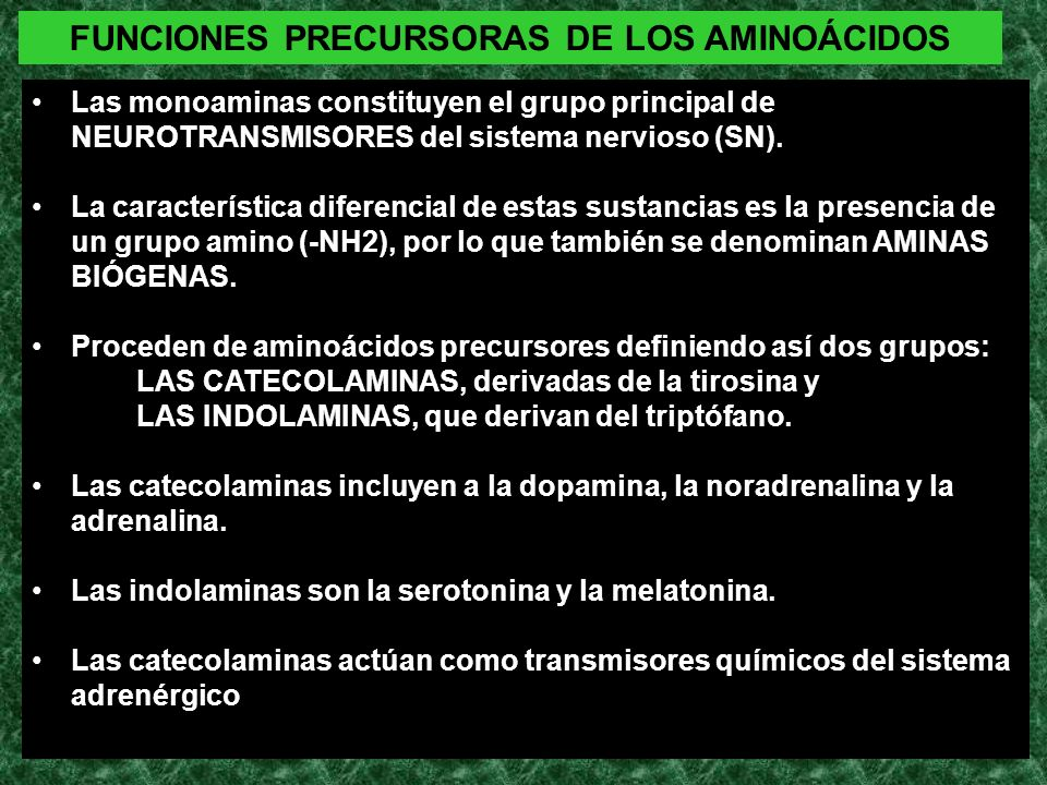 FUNCIONES PRECURSORAS DE LOS AMINOÁCIDOS Las monoaminas constituyen el grupo principal de NEUROTRANSMISORES del sistema nervioso (SN). La característi