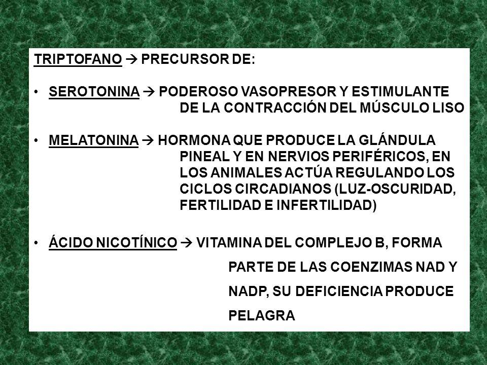 TRIPTOFANO PRECURSOR DE: SEROTONINA PODEROSO VASOPRESOR Y ESTIMULANTE DE LA CONTRACCIÓN DEL MÚSCULO LISO MELATONINA HORMONA QUE PRODUCE LA GLÁNDULA PI