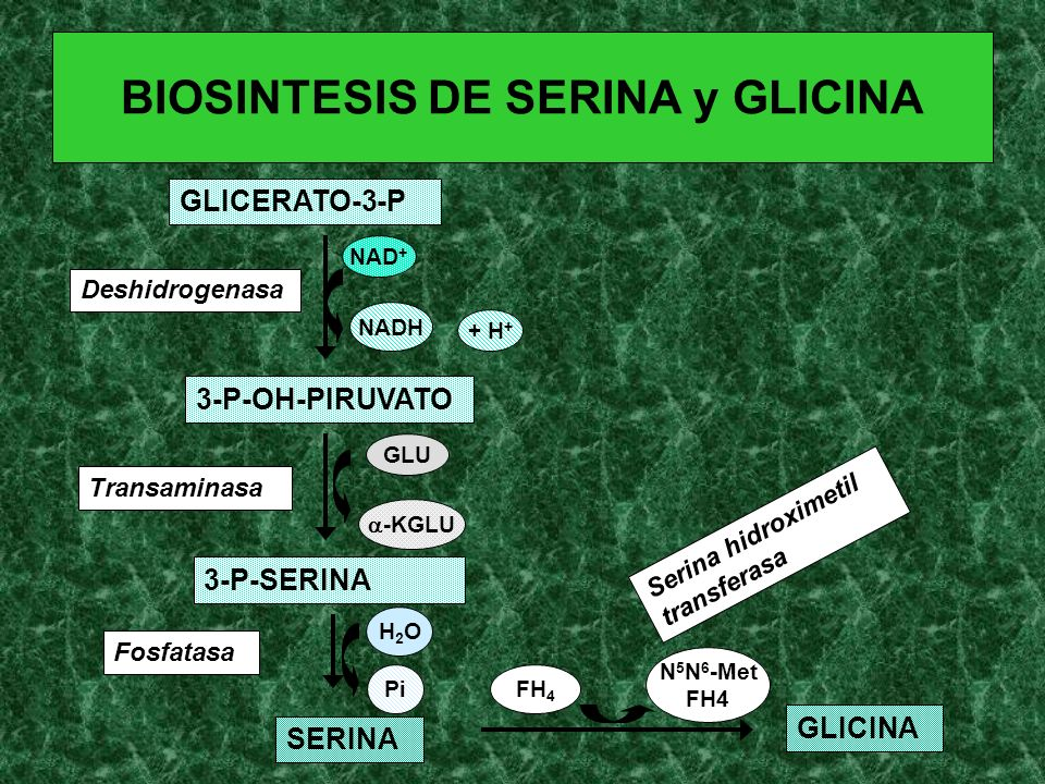 BIOSINTESIS DE SERINA y GLICINA GLICERATO-3-P 3-P-OH-PIRUVATO 3-P-SERINA SERINA GLICINA Deshidrogenasa Transaminasa Fosfatasa Serina hidroximetil tran