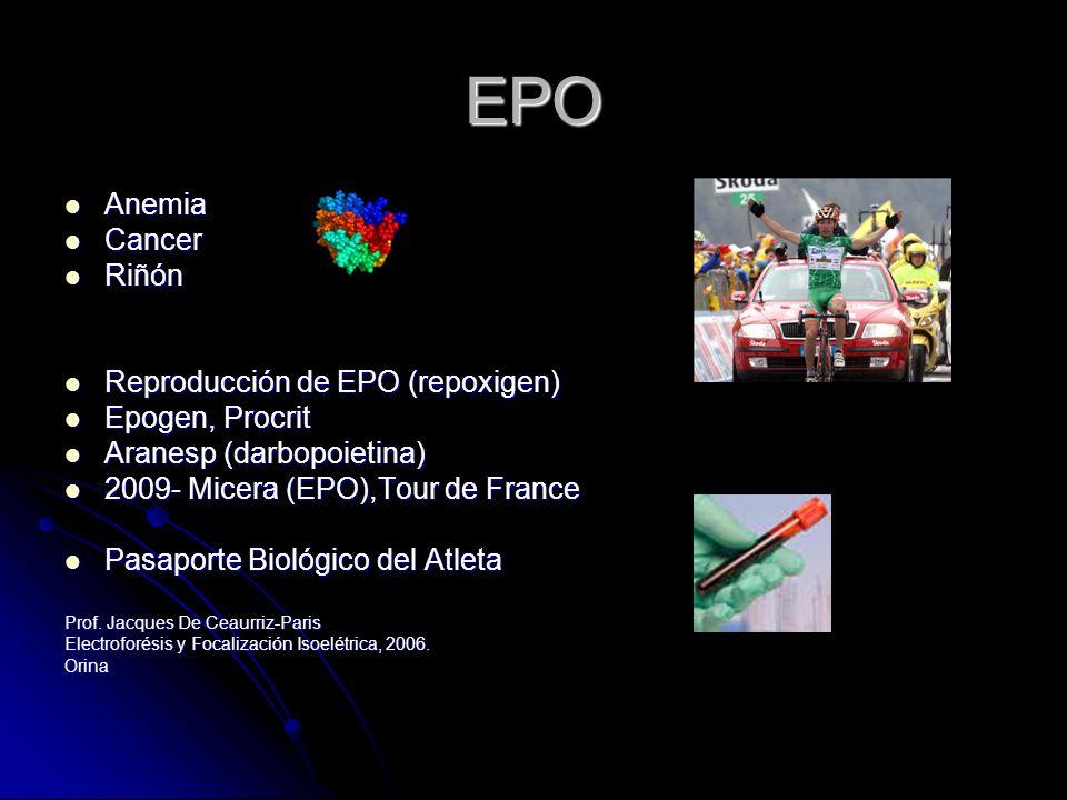 EPO Anemia Anemia Cancer Cancer Riñón Riñón Reproducción de EPO (repoxigen) Reproducción de EPO (repoxigen) Epogen, Procrit Epogen, Procrit Aranesp (d