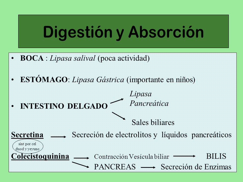 BOCA : Lipasa salival (poca actividad) ESTÓMAGO: Lipasa Gástrica (importante en niños) INTESTINO DELGADO Secretina Secreción de electrolitos y líquido