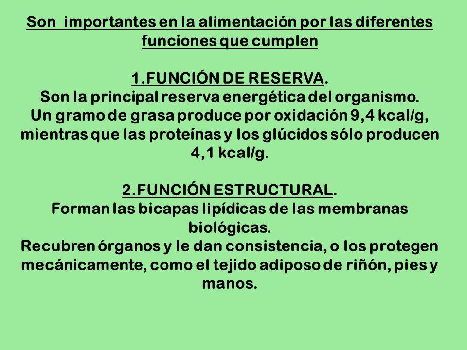 Son importantes en la alimentación por las diferentes funciones que cumplen 1.FUNCIÓN DE RESERVA. Son la principal reserva energética del organismo. U