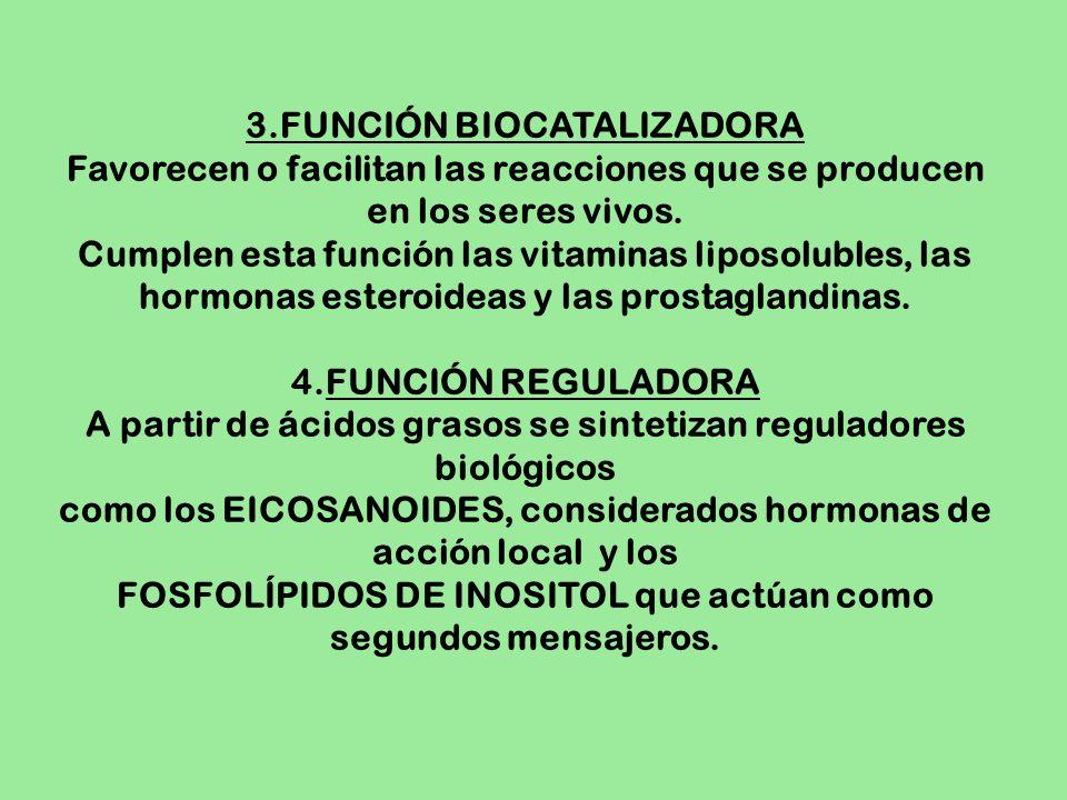 3.FUNCIÓN BIOCATALIZADORA Favorecen o facilitan las reacciones que se producen en los seres vivos. Cumplen esta función las vitaminas liposolubles, la