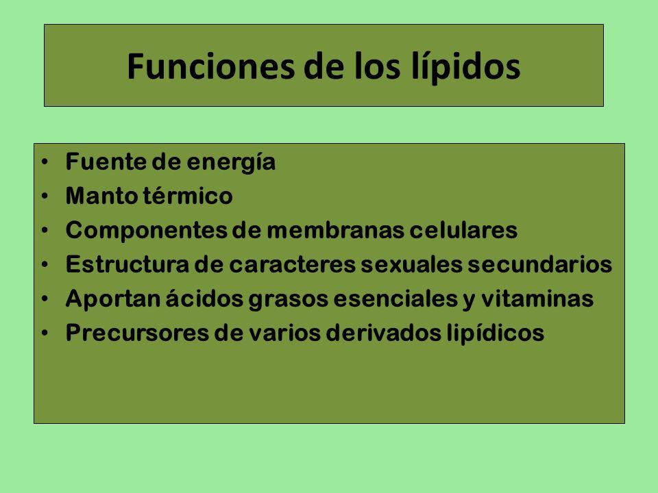 Funciones de los lípidos Fuente de energía Manto térmico Componentes de membranas celulares Estructura de caracteres sexuales secundarios Aportan ácid