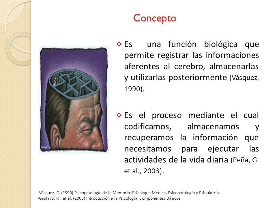 Concepto Es una función biológica que permite registrar las informaciones aferentes al cerebro, almacenarlas y utilizarlas posteriormente (Vásquez, 19