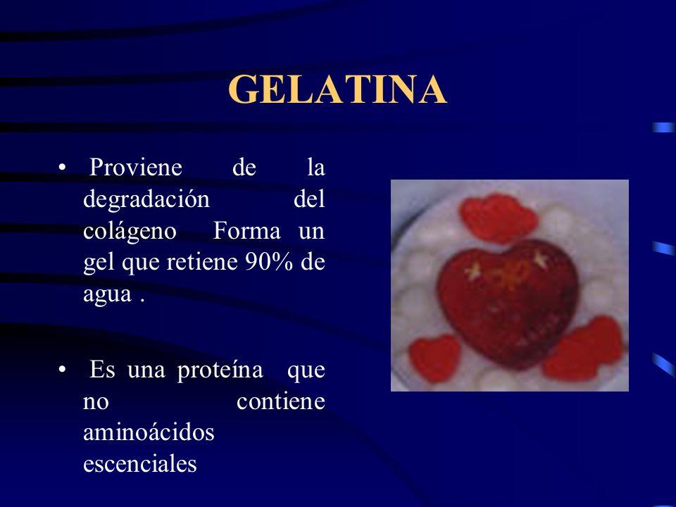 GELATINA Proviene de la degradación del colágeno Forma un gel que retiene 90% de agua. Es una proteína que no contiene aminoácidos escenciales