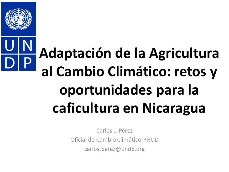 Efectos Esperados del CC sobre la Agricultura (Seguridad Alimentaria) 1.Reducción de los rendimientos por incrementos de la T°C, reducción y variabilidad en la disponibilidad de agua, y erosión de suelos; 2.Reducción en la disponibilidad de alimentos, en cantidad y calidad; menos calorías/capita al 2050; 3.Incremento en incidencia de plagas, afectando los rendimientos y manejo (costos) 4.Fenología variable – afectaciones inesperadas (i.e., Floración loca en café); 5.Precios – irregularidad (incrementos) por afectación de rendimientos