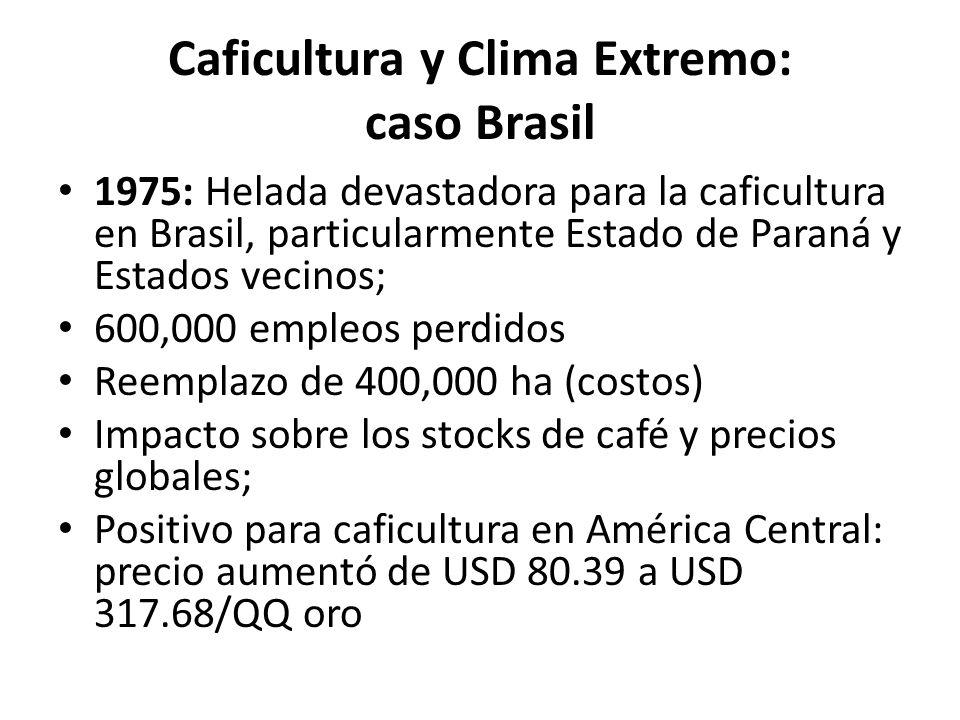 Caficultura y Clima Extremo: caso Brasil 1975: Helada devastadora para la caficultura en Brasil, particularmente Estado de Paraná y Estados vecinos; 6