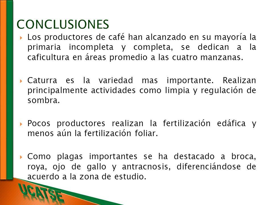 Los productores de café han alcanzado en su mayoría la primaria incompleta y completa, se dedican a la caficultura en áreas promedio a las cuatro manz