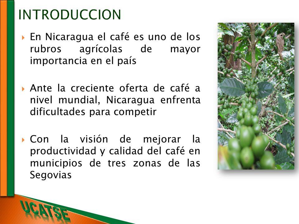 INTRODUCCION En Nicaragua el café es uno de los rubros agrícolas de mayor importancia en el país Ante la creciente oferta de café a nivel mundial, Nic