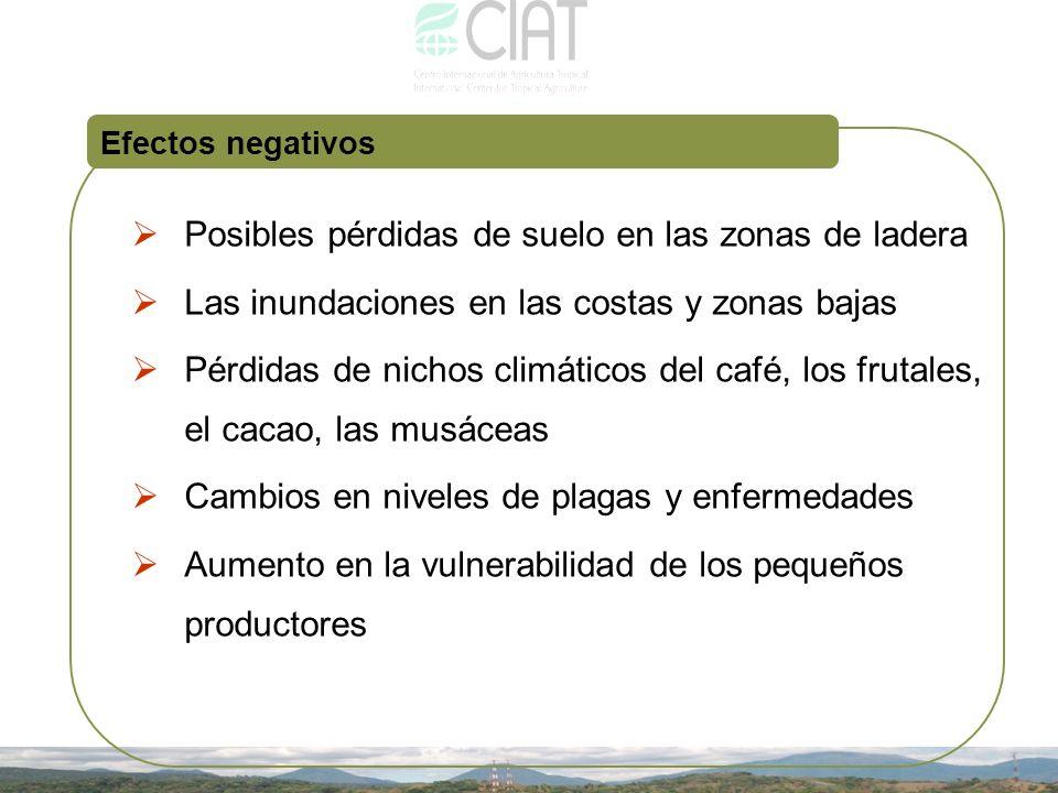 Efectos negativos Posibles pérdidas de suelo en las zonas de ladera Las inundaciones en las costas y zonas bajas Pérdidas de nichos climáticos del caf