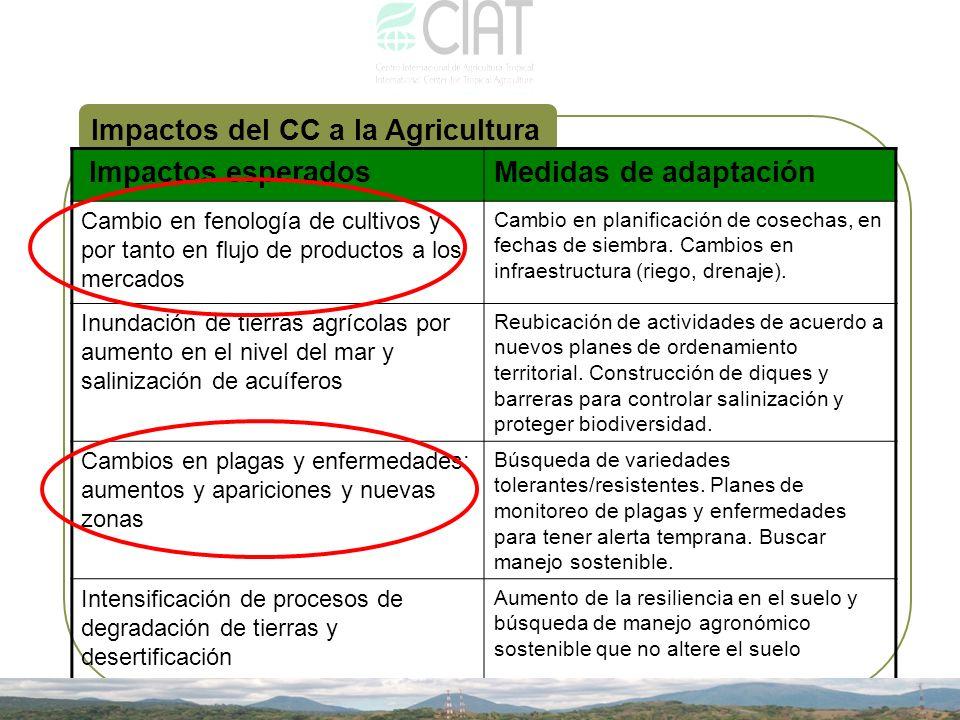Impactos del CC a la Agricultura Impactos esperadosMedidas de adaptación Cambio en fenología de cultivos y por tanto en flujo de productos a los merca