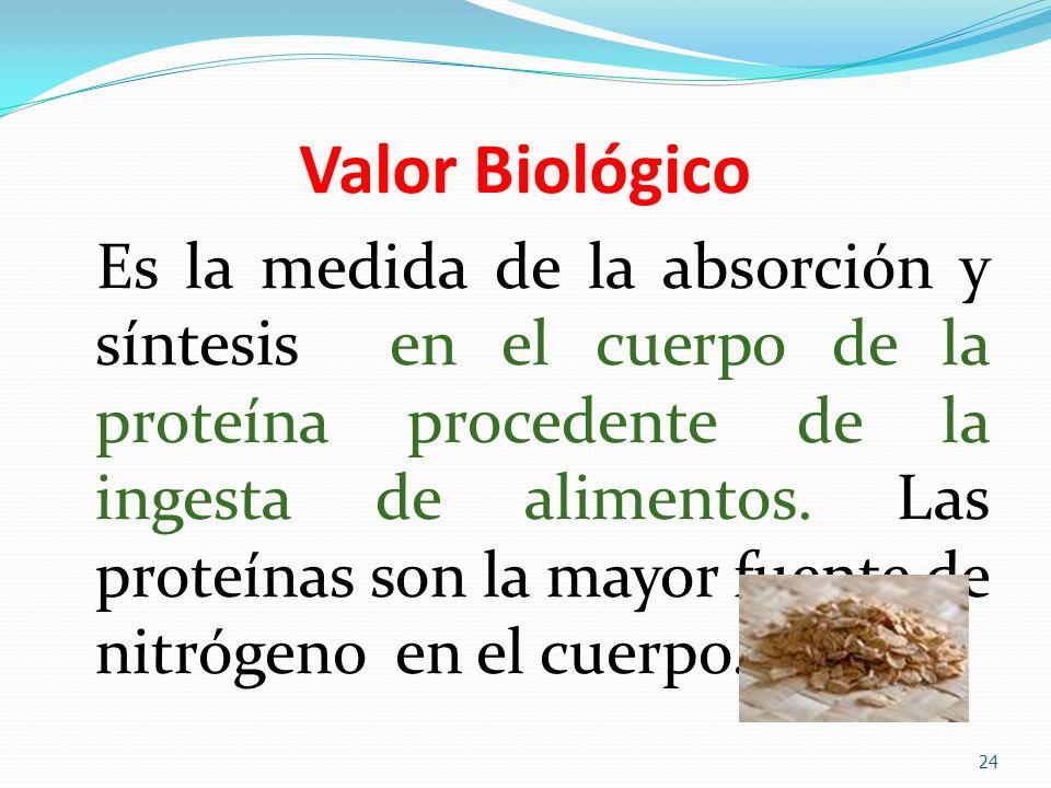 Valor Biológico Es la medida de la absorción y síntesis en el cuerpo de la proteína procedente de la ingesta de alimentos. Las proteínas son la mayor
