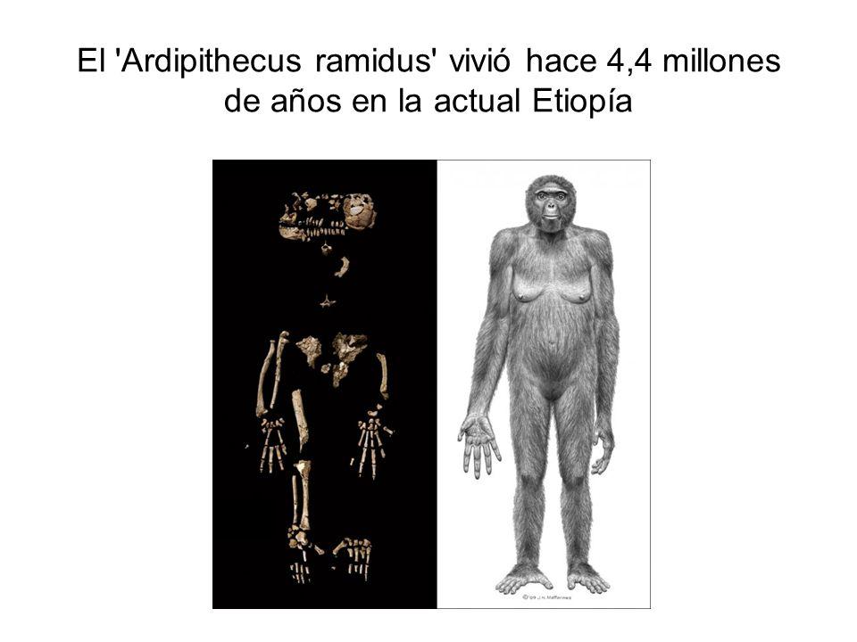 El 'Ardipithecus ramidus' vivió hace 4,4 millones de años en la actual Etiopía
