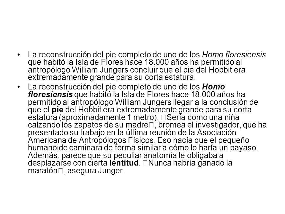 La reconstrucción del pie completo de uno de los Homo floresiensis que habitó la Isla de Flores hace 18.000 años ha permitido al antropólogo William J