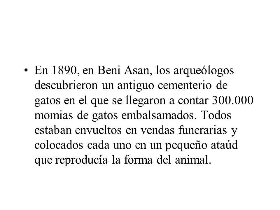 En 1890, en Beni Asan, los arqueólogos descubrieron un antiguo cementerio de gatos en el que se llegaron a contar 300.000 momias de gatos embalsamados