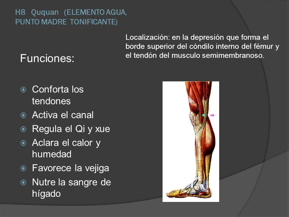 H8 Ququan (ELEMENTO AGUA, PUNTO MADRE TONIFICANTE ) Localización: en la depresión que forma el borde superior del cóndilo interno del fémur y el tendó