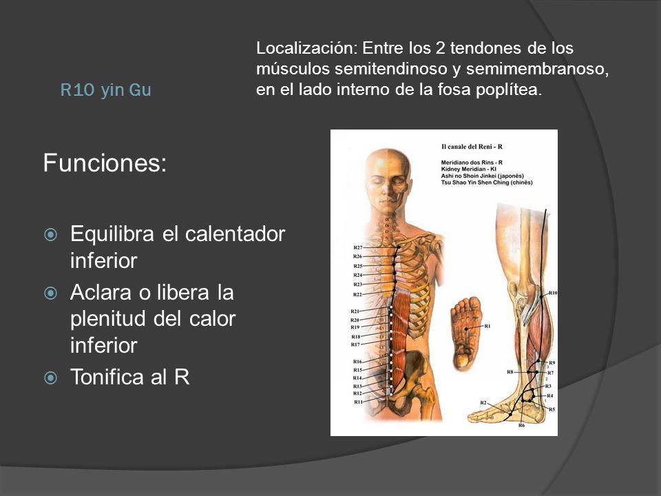 R10 yin Gu Localización: Entre los 2 tendones de los músculos semitendinoso y semimembranoso, en el lado interno de la fosa poplítea. Funciones: Equil
