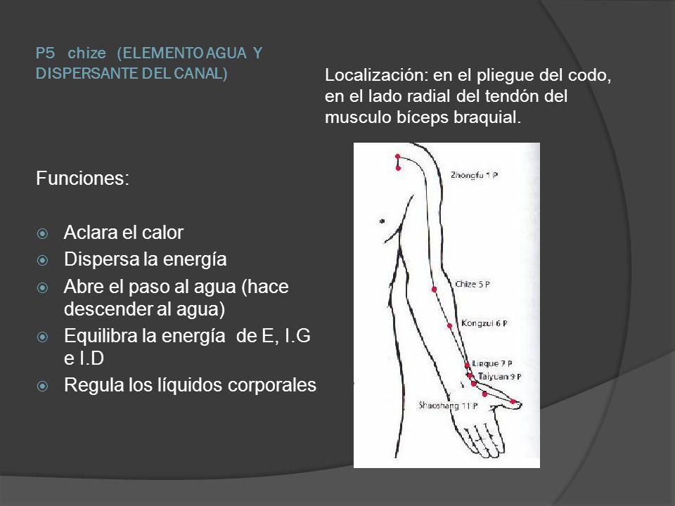 P5 chize (ELEMENTO AGUA Y DISPERSANTE DEL CANAL) Localización: en el pliegue del codo, en el lado radial del tendón del musculo bíceps braquial. Funci