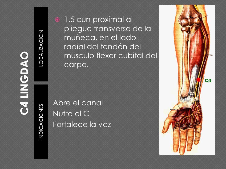 LOCALIZACION INDICACIONES 1.5 cun proximal al pliegue transverso de la muñeca, en el lado radial del tendón del musculo flexor cubital del carpo. Abre