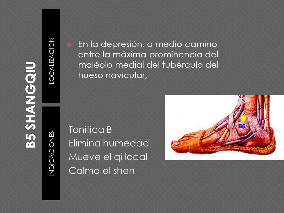 LOCALIZACION INDICACIONES En la depresión, a medio camino entre la máxima prominencia del maléolo medial del tubérculo del hueso navicular, Tonifica B