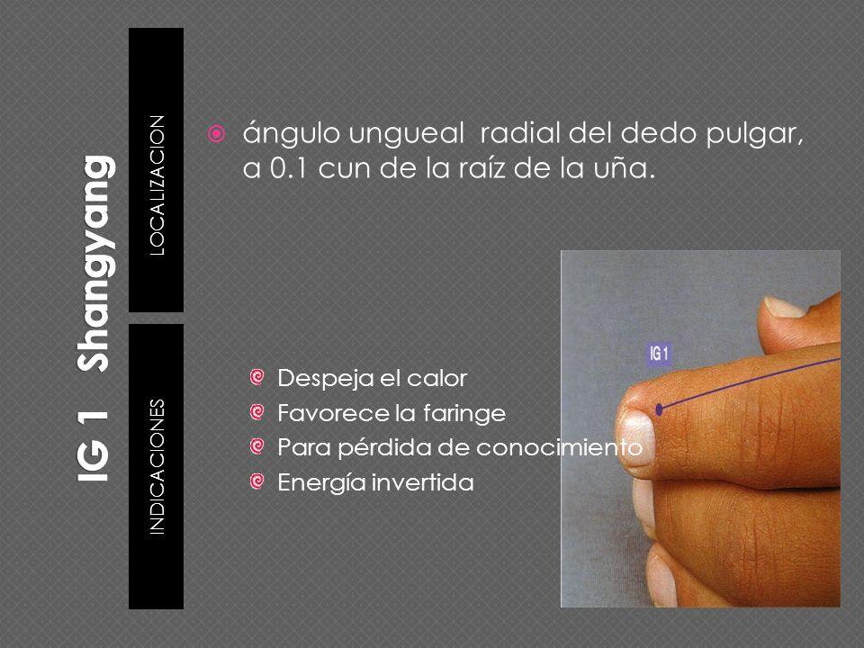 Despeja el calor Favorece la faringe Para pérdida de conocimiento Energía invertida ángulo ungueal radial del dedo pulgar, a 0.1 cun de la raíz de la