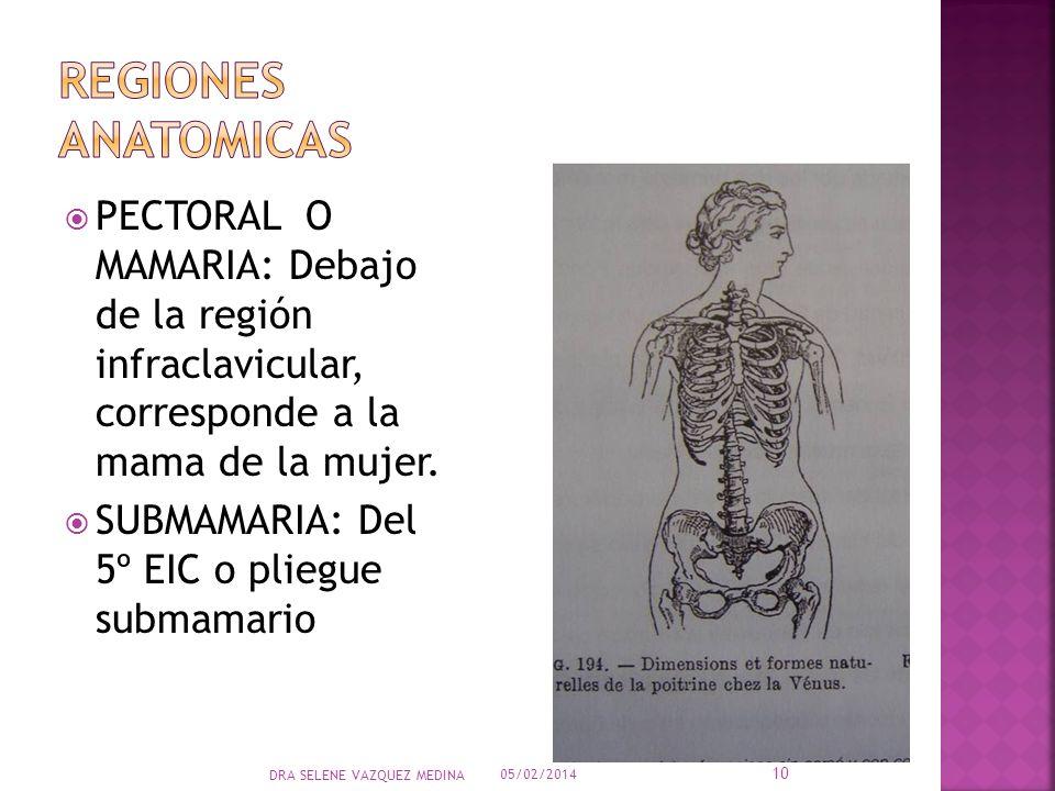 PECTORAL O MAMARIA: Debajo de la región infraclavicular, corresponde a la mama de la mujer. SUBMAMARIA: Del 5º EIC o pliegue submamario 05/02/2014 10