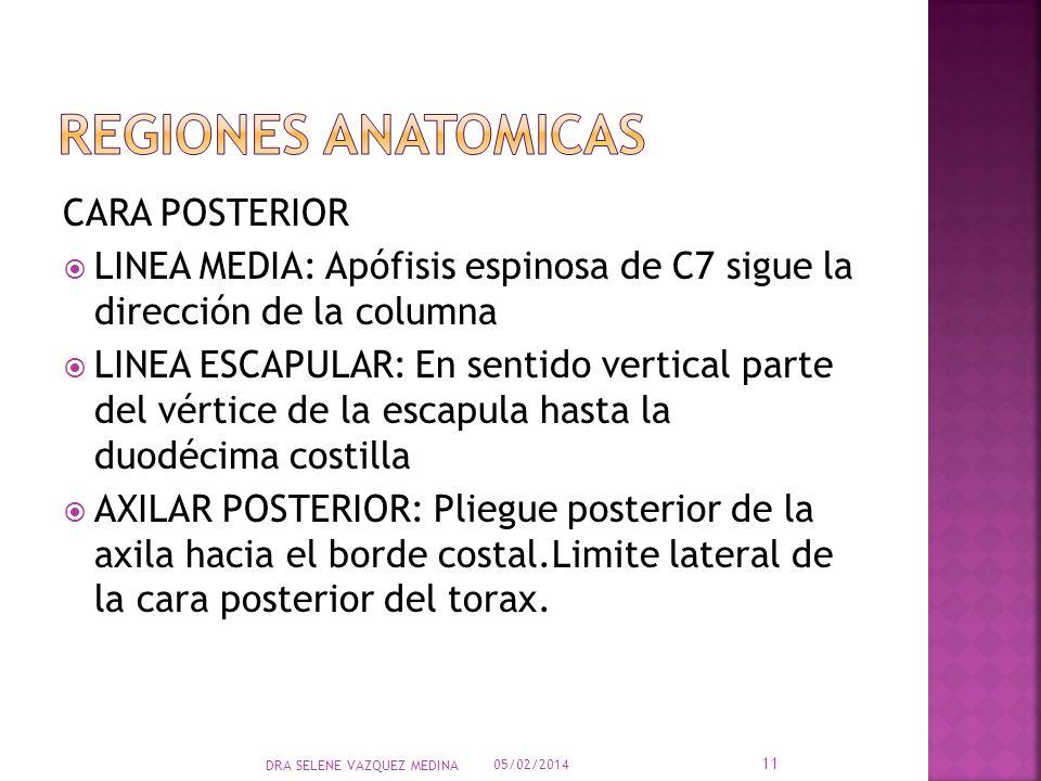 CARA POSTERIOR LINEA MEDIA: Apófisis espinosa de C7 sigue la dirección de la columna LINEA ESCAPULAR: En sentido vertical parte del vértice de la esca