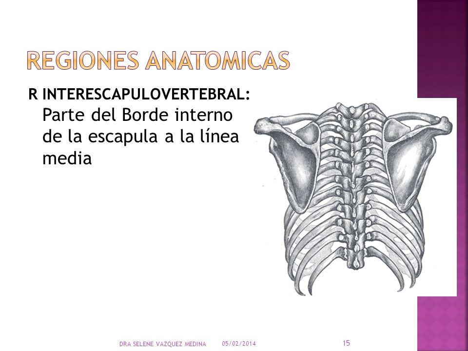 R INTERESCAPULOVERTEBRAL: Parte del Borde interno de la escapula a la línea media 05/02/2014 15 DRA SELENE VAZQUEZ MEDINA