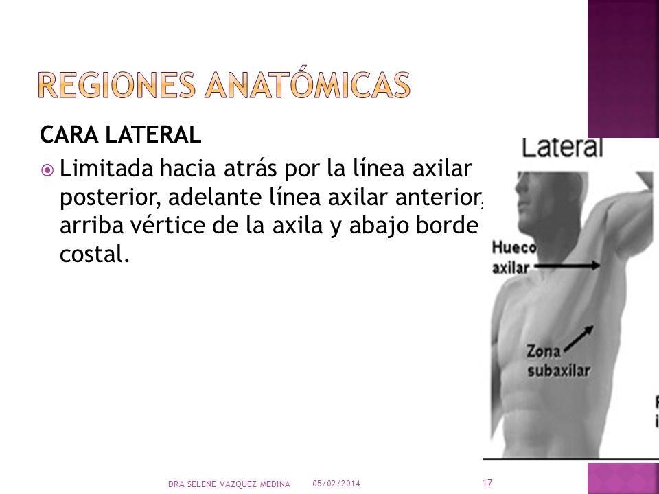 CARA LATERAL Limitada hacia atrás por la línea axilar posterior, adelante línea axilar anterior, arriba vértice de la axila y abajo borde costal. 05/0