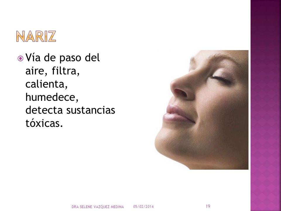 Vía de paso del aire, filtra, calienta, humedece, detecta sustancias tóxicas. 05/02/2014 19 DRA SELENE VAZQUEZ MEDINA
