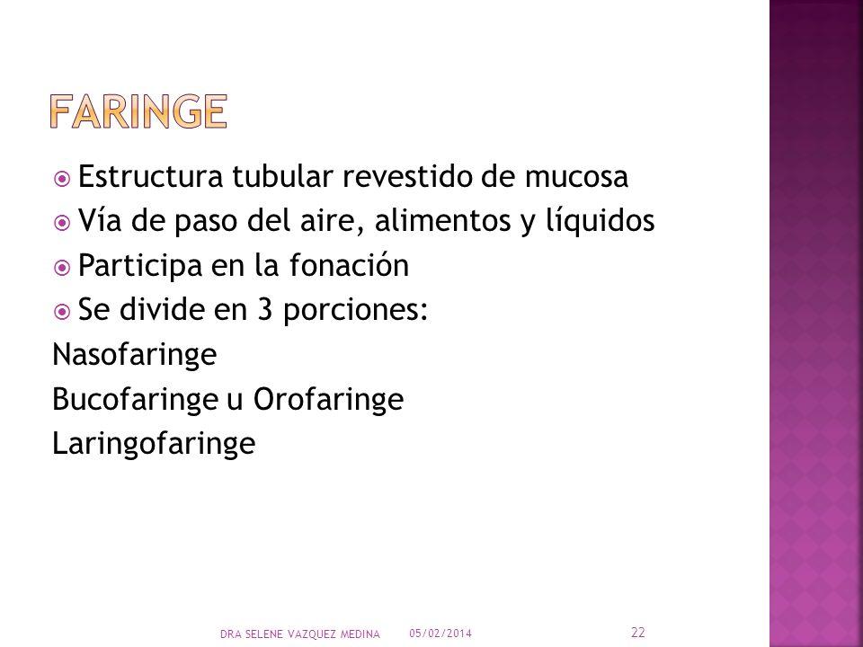 Estructura tubular revestido de mucosa Vía de paso del aire, alimentos y líquidos Participa en la fonación Se divide en 3 porciones: Nasofaringe Bucof